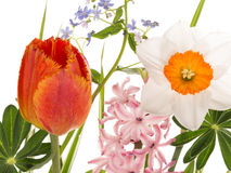 Beautiful spring flowers in bright bouquet Royalty Free Stock Photos