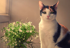 Beautiful spring flowers and cat Royalty Free Stock Photos