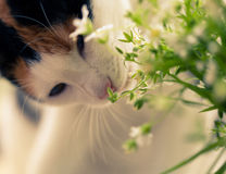 Beautiful spring flowers and cat Stock Photography