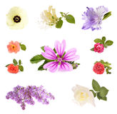 Beautiful spring flowers Royalty Free Stock Photography