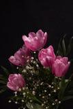 Beautiful spring flowers Stock Image