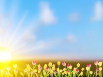 Beautiful spring flowers. EPS 10. Beautiful spring flowers. And also includes EPS 10 vector Royalty Free Stock Photos