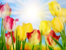 Beautiful spring flowers. EPS 10. Beautiful spring flowers. And also includes EPS 10 vector Royalty Free Stock Image