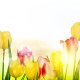 Beautiful spring flowers. EPS 10 Royalty Free Stock Photo