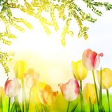 Beautiful spring flowers. EPS 10 Royalty Free Stock Images
