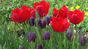 Beautiful spring flowers in farm. Beautiful spring time flowers in farm stock video