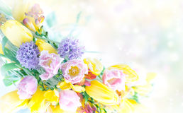 Beautiful spring flowers frame. Bordrer - festive background stock photo