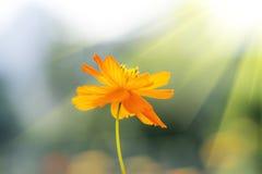 Beautiful spring flowers Stock Photos