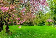 Beautiful spring flowers. In garden stock image
