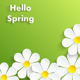 Beautiful Spring Flowers green Background Stock Photo