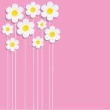 Beautiful Spring Flowers -  illustration.  Stock Photos