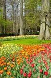 Beautiful spring flowers in Keukenhof park Stock Image