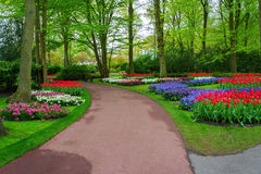 Beautiful spring flowers in Keukenhof park in Netherlands Royalty Free Stock Photography
