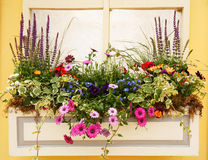 Beautiful Spring Flowers and Leaves Planter Royalty Free Stock Image
