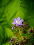 Beautiful spring flowers. Macro shoot. Royalty Free Stock Image