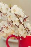 Beautiful spring flowers in mug. Royalty Free Stock Photography