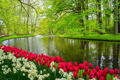 Beautiful spring flowers near pond in Keukenhof park in Netherlands Royalty Free Stock Photo
