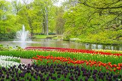 Beautiful spring flowers near pond in Keukenhof park in Netherlands Royalty Free Stock Images