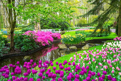 Beautiful spring flowers near pond in Keukenhof park in Netherlands Royalty Free Stock Photos