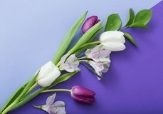 Spring flowers on paper background. Beautiful spring flowers on paper background royalty free stock image