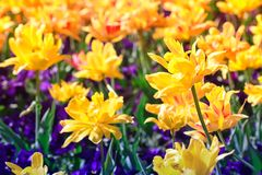 Beautiful spring flowers on park Stock Images