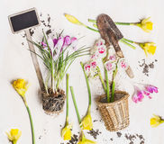 Beautiful spring flowers with pot, garden sign and shovel with pot on white wooden background Royalty Free Stock Photography