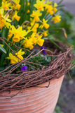 Beautiful spring flowers in a pot Royalty Free Stock Photo