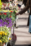 Flowers at market Stock Image
