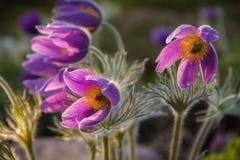 Beautiful spring flowers in Sapokka Water Gaden. Kotka, Finland Stock Photos