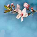 Beautiful spring flowers in sunshine. Stock Photos