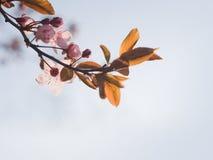 Beautiful spring flowers in sunshine. Stock Image