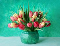 Tulips in vase. Beautiful spring flowers tulips in glass vase Stock Image