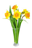 Beautiful spring flowers in vase: orange narcissus (Daffodil) Stock Photo