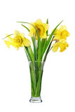 Beautiful spring flowers in vase: yellow  narcissus (Daffodil) Stock Image