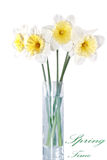 Beautiful spring flowers in vase: yellow-white narcissus (Daffod Royalty Free Stock Images