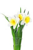 Beautiful spring flowers in vase: yellow-white narcissus (Daffod Stock Photo