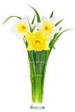 Beautiful spring flowers in vase: yellow-white, orange narcissus Stock Images