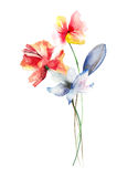 Beautiful spring flowers Royalty Free Stock Images