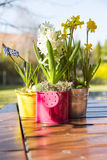 Beautiful spring flowers in watering cans Stock Photo