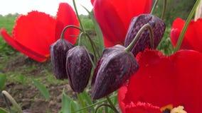 Beautiful spring flowers. In wind stock video