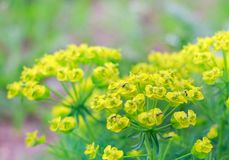A beautiful spring flowers of yellow stock photography