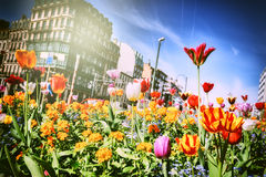 Beautiful spring flwers Stock Photos
