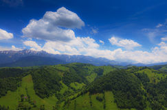 Beautiful spring foliage and a mountain forest Royalty Free Stock Photography