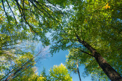Beautiful spring foliage and a mountain forest Royalty Free Stock Images
