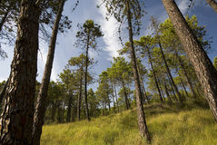 Beautiful spring forest landscape Stock Photography