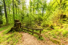 Forest is Spring, Vulkaneifel Gerolstein Germany. Beautiful spring forest landscape with in area of mill stone and ice caves and beech trees in volcanic Eifel at stock photos