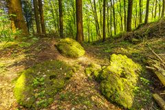 Volcanic Eifel at Roth, Gerolstein Germany. Beautiful spring forest landscape with in area of mill stone and ice caves and beech trees in volcanic Eifel at Roth royalty free stock photography