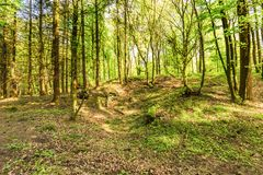 Volcanic Eifel at Roth, Gerolstein Germany. Beautiful spring forest landscape with in area of mill stone and ice caves and beech trees in volcanic Eifel at Roth Royalty Free Stock Photos