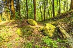 Volcanic Eifel at Roth, Gerolstein Germany. Beautiful spring forest landscape with in area of mill stone and ice caves and beech trees in volcanic Eifel at Roth stock image