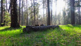 Beautiful spring forest. stock footage